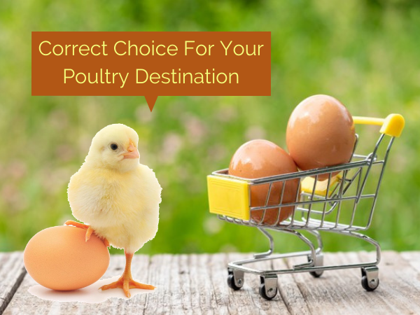 Correct Choice For Your Poultry Destination